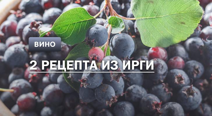 Вино из ирги: 2 рецепта в домашних условиях