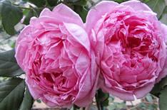 Ликер из розы: 6 рецептов в домашних условиях