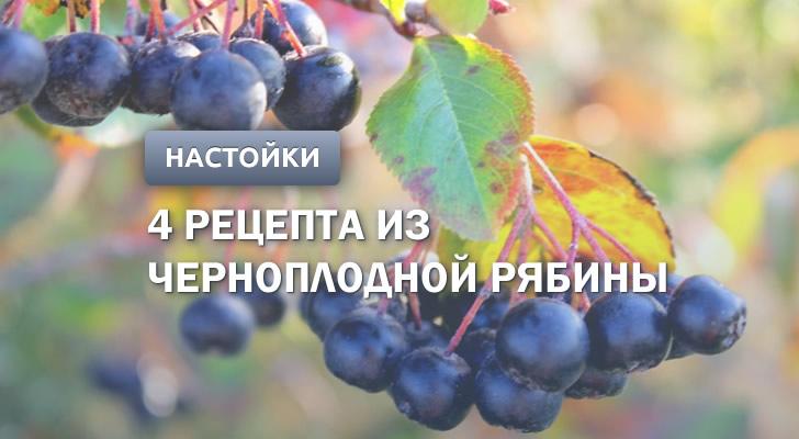 Настойка из черноплодной рябины: 4 рецепта в домашних условиях