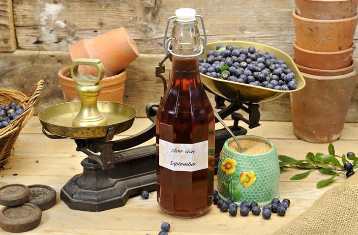 Терновый джин, наливка и вино: 3 рецепта в домашних условиях