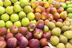 Яблочный сидр: 2 рецепта в домашних условиях