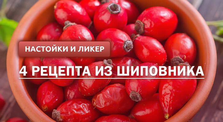 Настойка и ликер из шиповника: 4 рецепта в домашних условиях