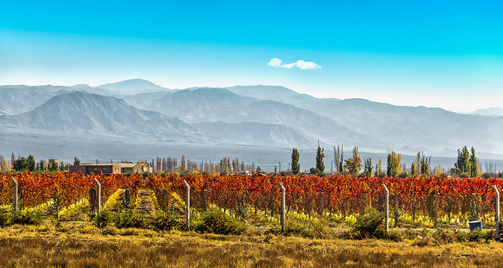 Чилийское вино: история, обзор видов и вкусов