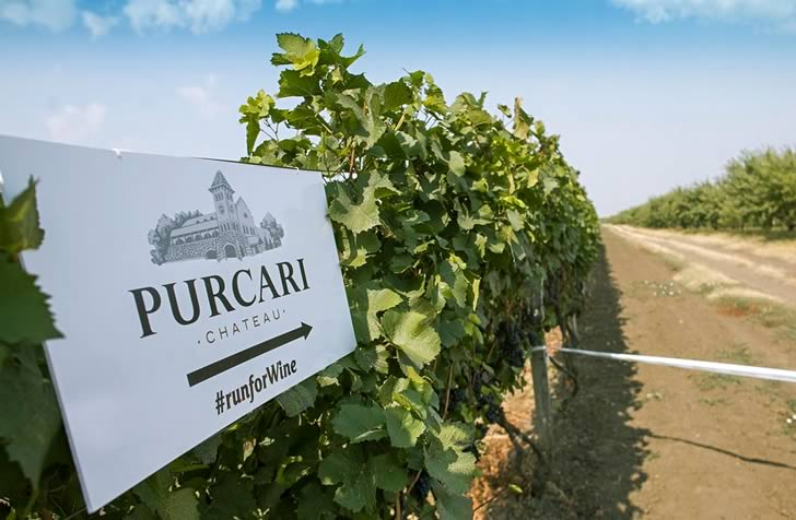 Пуркарь вино: история, обзор и виды