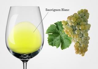 Вино из Совиньон Блан: обзор, регионы выращивания и нюансы + как пить