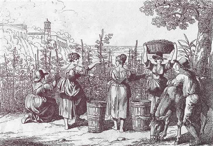 История вина: от древности до наших дней