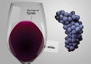 Вино Сира (Шираз): история и обзор напитка