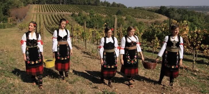 Особенности сербского виноделия