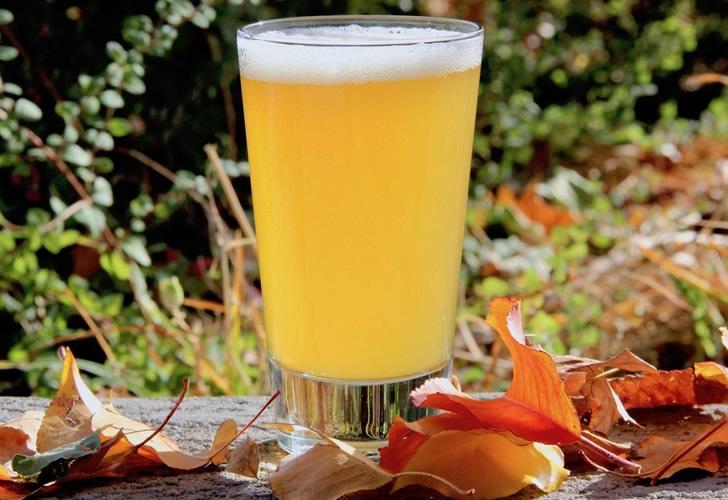 Нефильтрованное пиво: история, как делают, в чем разница, какие марки попробовать