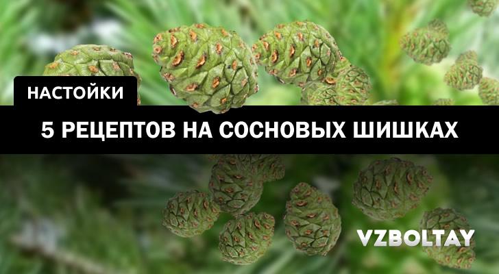 Настойка на сосновых шишках: 5 рецептов + свойства и применение