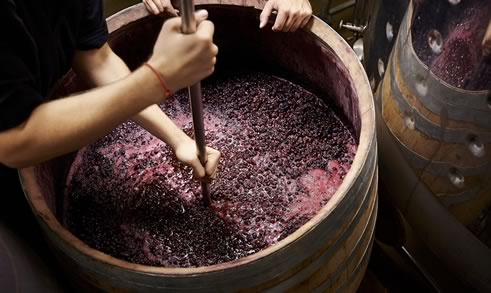 Виноматериал: что это и другая интересная информация