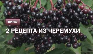 Вино из черемухи: 2 рецепта в домашних условиях