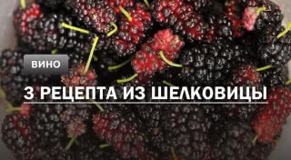 Вино из шелковицы: 3 рецепта в домашних условиях