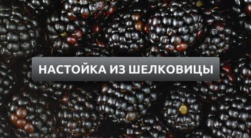 Настойка из шелковицы: простой рецепт в домашних условиях