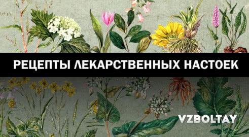 Лекарственные настойки: 9 рецептов из популярных растений